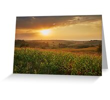Corn field at sunset Greeting Card