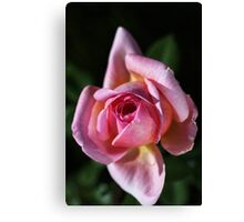 Love For Pink Rose Canvas Print