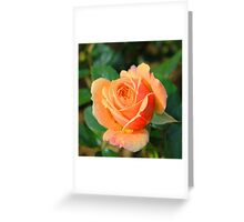 Rose thé Greeting Card