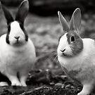 Bunny Buddies by Vicki Field