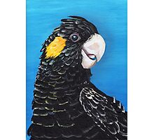 Black Cockatoo Photographic Print