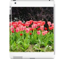 pink tulips on the flowerbed in the park iPad Case/Skin