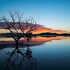Skeleton at Dawn by Stephen  Nicholson