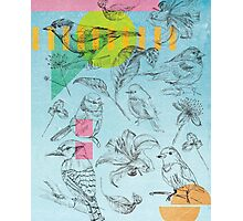 Birds, Flowers, Nature, Botanic, Blue, Sketch, Leaves Photographic Print