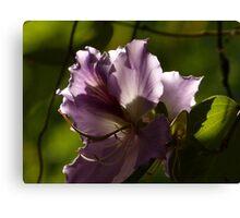 one flower - una flor Canvas Print