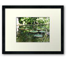 Water Lilies, Botanic Garden, Mauritius Framed Print