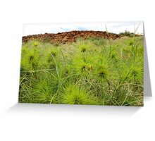Spinifex Dreaming - West Lewis Is WA Greeting Card