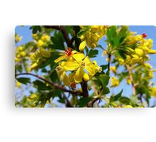Yellow blooming Canvas Print