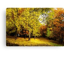 alley in the city park in autumn Canvas Print