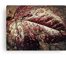 Water drops 2 Canvas Print