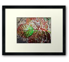 Water drops 3 Framed Print