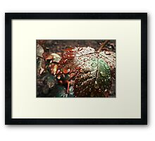 Water drops 4 Framed Print