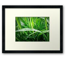 Water drops 7 Framed Print