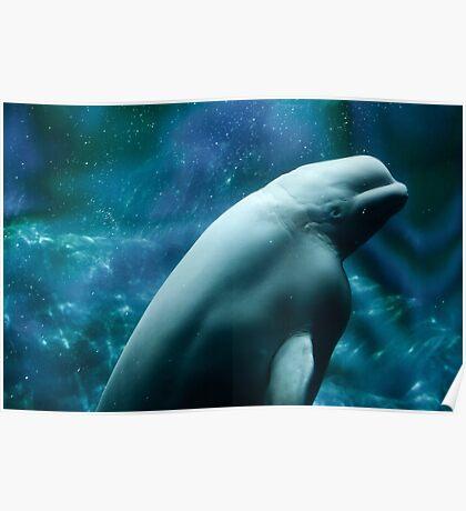 Beautiful Beluga Whale Poster