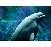 Beautiful Beluga Whale Photographic Print