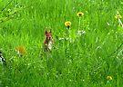 Little Squirrel by Evelyn Laeschke