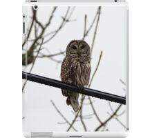 Barred Owl On A Wire iPad Case/Skin
