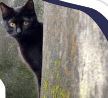 Shaped-Black Kitten Explorer Sticker