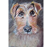 rescue dog, France Photographic Print