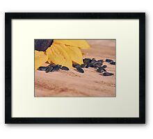 sunflowers and scattered sunflower seeds Framed Print