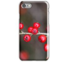 Small red berries on a Cotoneaster bush. iPhone Case/Skin