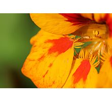 Orange and Yellow Flower Photographic Print