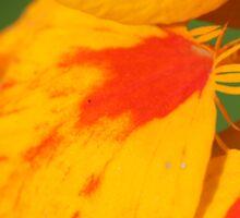 Orange and Yellow Flower Sticker