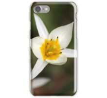 The wild tulip Tulipa turkestanica iPhone Case/Skin
