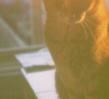 Dreamy Cat - Yashica Medium Format Photograph Sticker