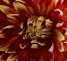 Blooming Dahlia Bud Sticker