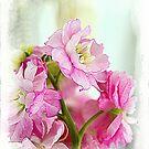 Pretty In Pink by Anna Larson