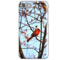 Red Robin iPhone Case/Skin