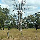 Dead Tree makes a statement - still Beautiful by EdsMum