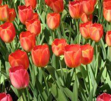 Keukenhof Tulips Sticker