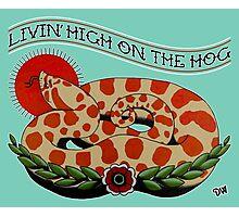 Livin' High on the Hog Photographic Print