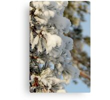 Snow Dusted Tree Canvas Print