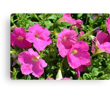 Pink flowers natural background. Canvas Print