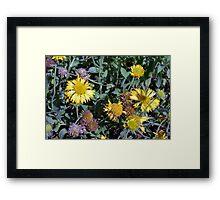 Yellow flowers in the garden. Framed Print