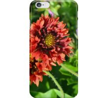 Beautiful colorful red flowers in the garden. iPhone Case/Skin
