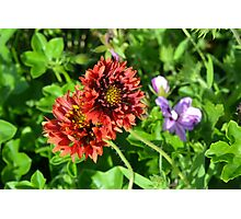 Beautiful colorful red flowers in the garden. Photographic Print