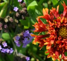 Beautiful colorful flowers in the garden. Sticker