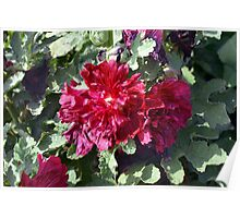Beautiful red purple flowers and green leaves. Poster
