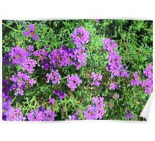 Purple flowers and green leaves bush. Poster