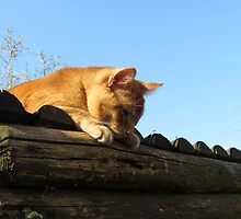 Cat on the roof by ienemien