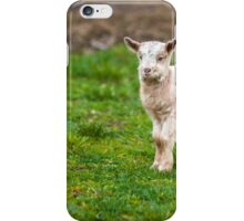 Baby goat on a meadow with copyspace iPhone Case/Skin
