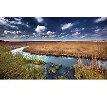 Marshes and reed Photographic Print