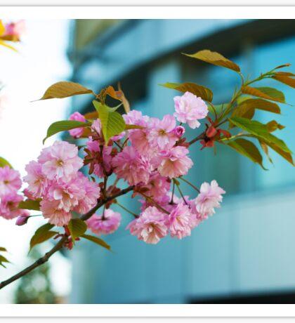 blooming plum branch Sticker