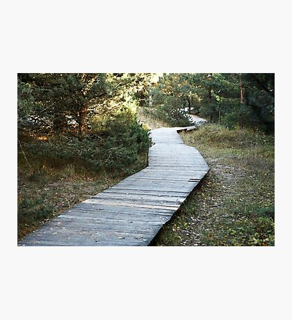 wooden walkway in the forest Photographic Print