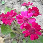 Flowers by Vitta