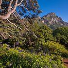 View from Kirstenbosch, South Africa by Erik Schlogl